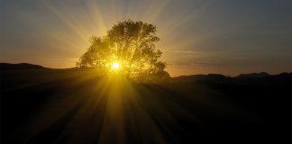 Copacul care a umbrit pământul